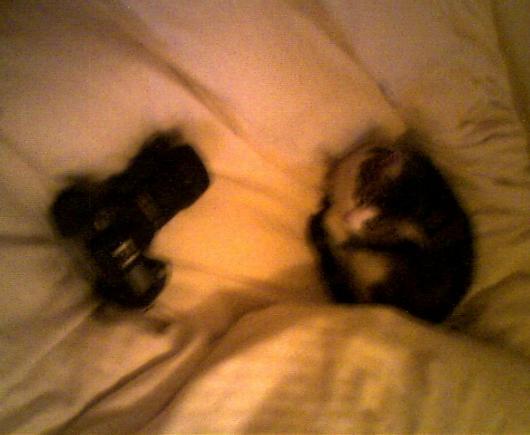 Cat and Nikon